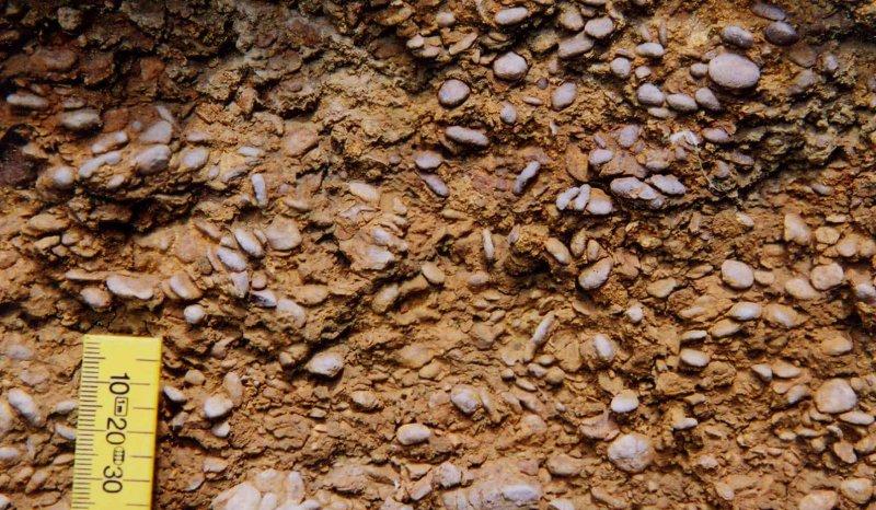 Pea Grit Oncoids, Leckhampton Hill, Aalenian Inferior Oolite