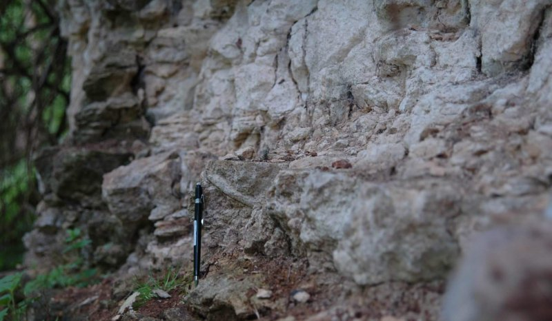 Belemnite littered transgressive surface, Dead Mans Quarry