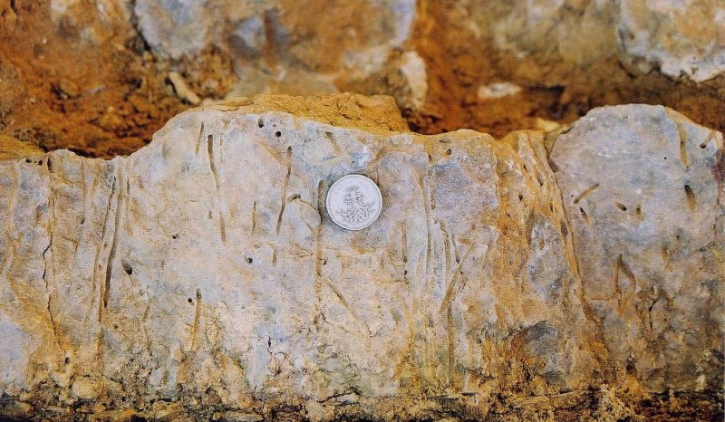 Skolithos burrows in the Aalenian Inferior Oolite sandy beds