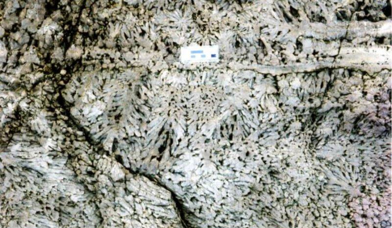 Pinnate and Spherulitic Dedolomite near top Hauptdolomit, Seaham Harbour, Zechstein