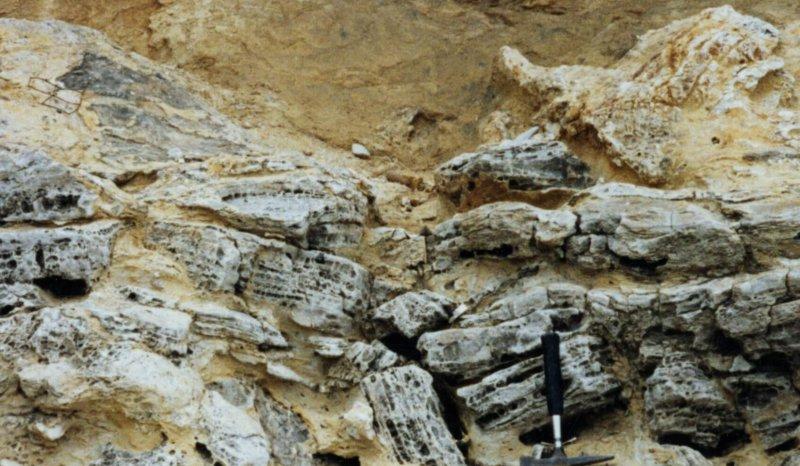 Evaporite residue following recent halite leaching, Zechstein, Seaham foreshore