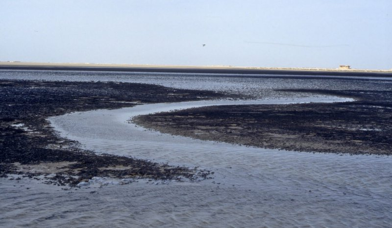 Algal mat cut by a tidal creek, Abu Dhabi