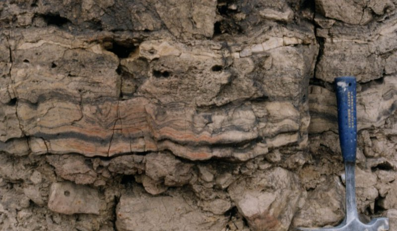 Stromatolitic laminated sheets, Blackhall Rocks boulder bed, Zechstein