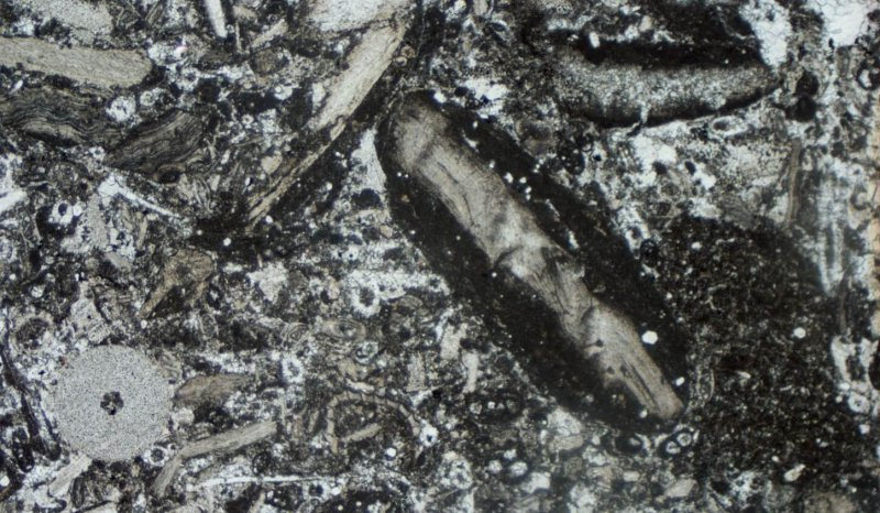 Thin section of D2 Dove Hall, Carboniferous, Derbyshire