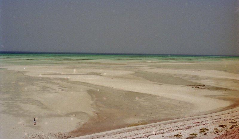 Present day subtidal sediments, Trucial Coast, Abu Dhabi