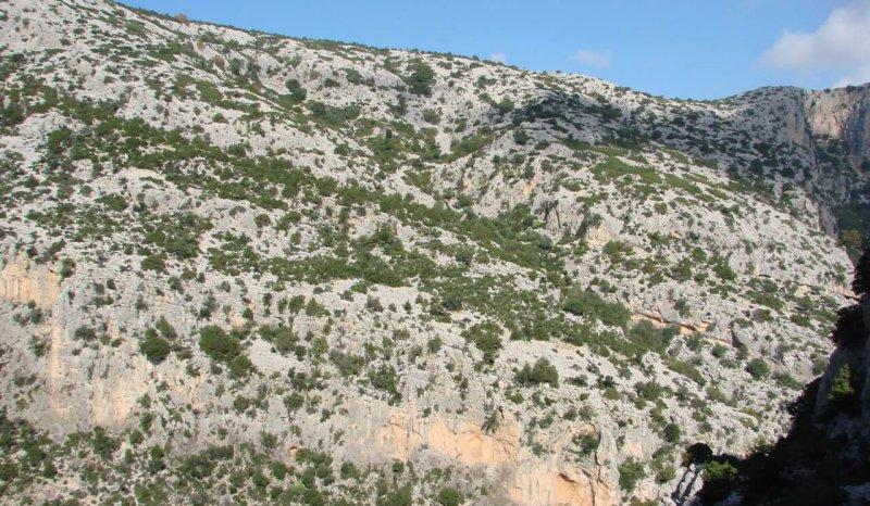 The Middle Jurassic – Berriasian passive margin succession of eastern Sardinia