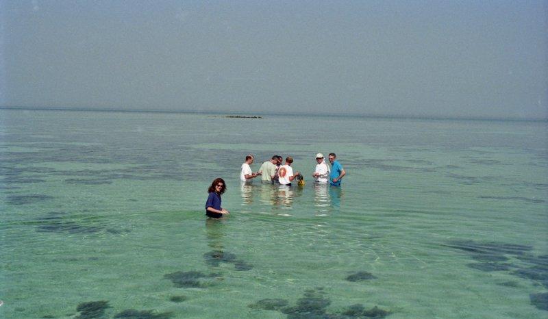 Geology fieldtrip to examine present day subtidal sediments, Trucial Coast, Abu Dhabi