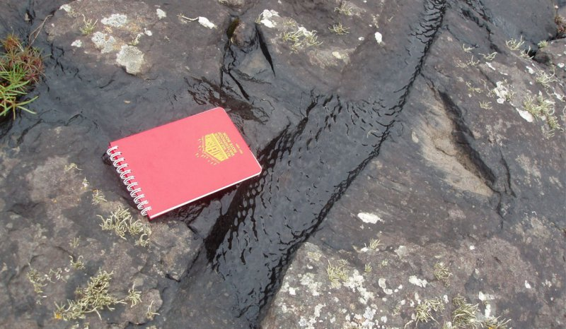 Stigmaria root system in Namurian delta top facies, Clare Basin, West of Ireland