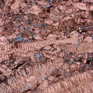 Large Benthic Foraminifera Packstone - Grainstone