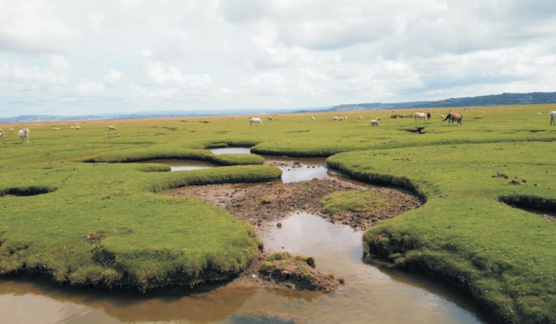 Tidal creeks dissect supratidal salt marsh, Loughor Estuary margin