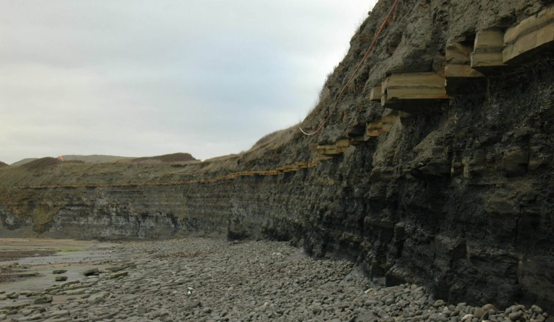 Kimmeridge Clay at Kimmeridge Bay
