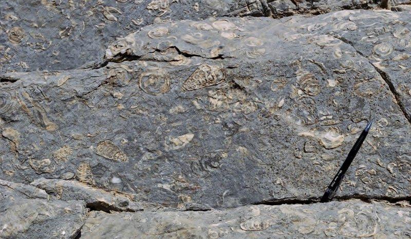 Habshan Formation, Wadi Nakhr