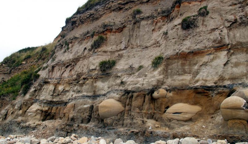 Oil stained Jurassic Bencliff Grit sandstones with large authigenic calcite nodules, Osmington Mills