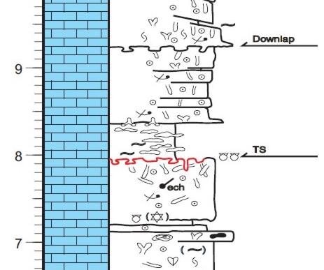 Carbonate sedimentology outcrop log, Carbonate log, Outcrop Description